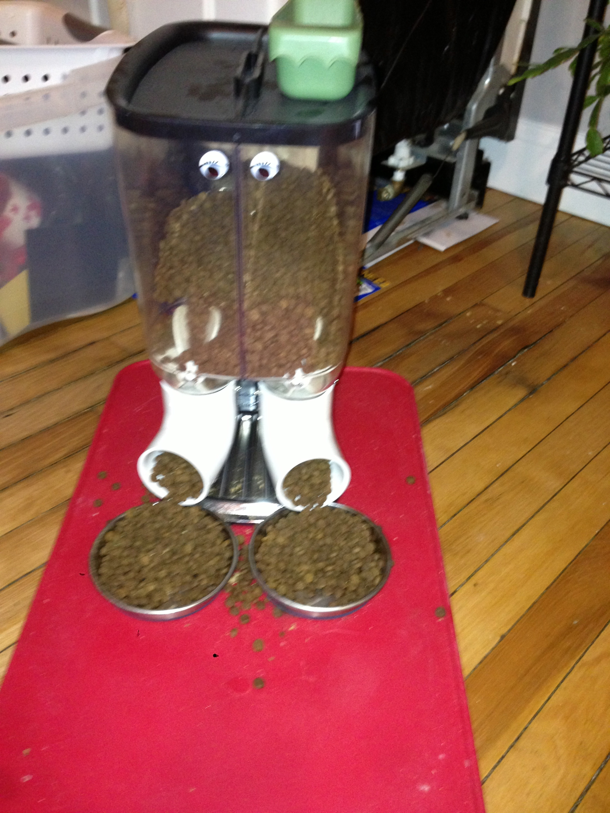 and dog animal feeders timed programmable feeder pin food cat fountains automatic pet dishes
