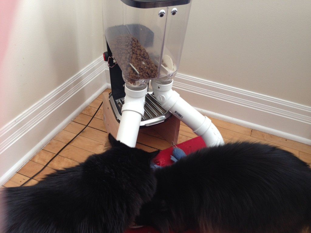 DST_Cat eats